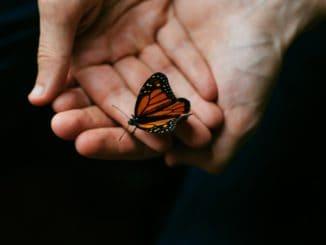 La mariposa que no podía volar