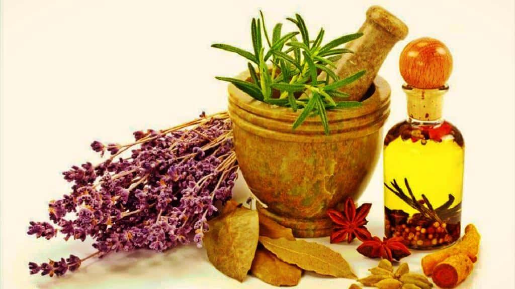 Fitoterapia – Plantas como cura de las enfermedades