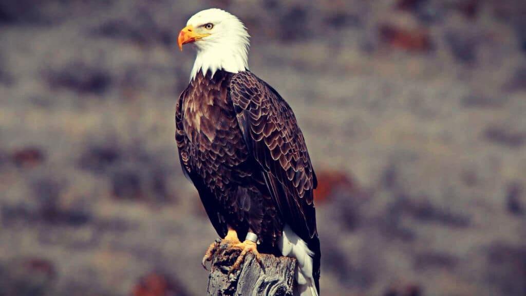 Águila y el Ego