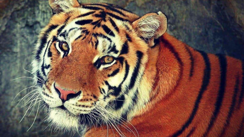 Año del Tigre 2010