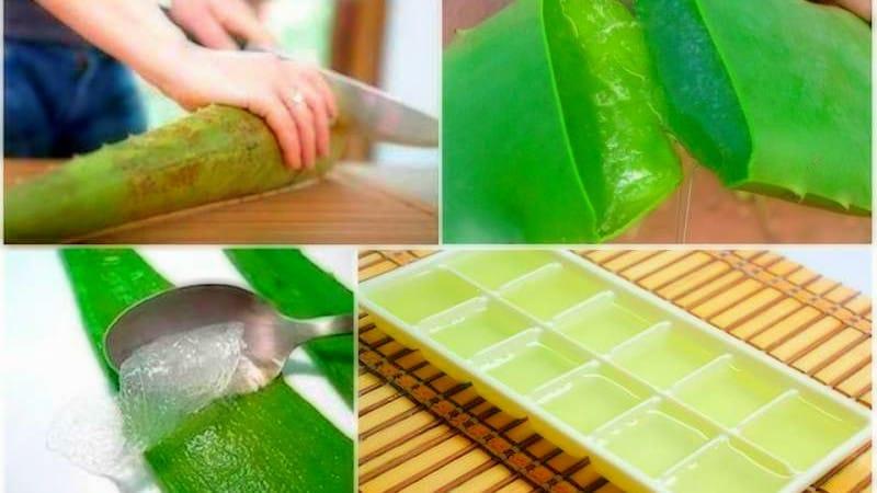 ¿Cómo congelar gel de Aloe Vera?