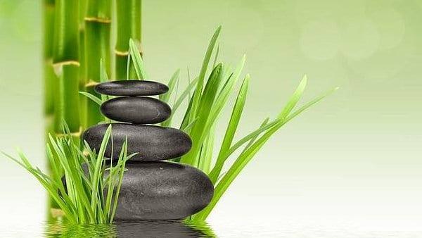 Lucky Bamboo – Plantas Mágicas – Bambú de la buena suerte