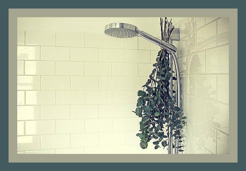 Eucaliptus en la ducha