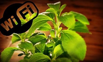 Wi-Fi y celulares influyen sobre el crecimiento de tus plantas