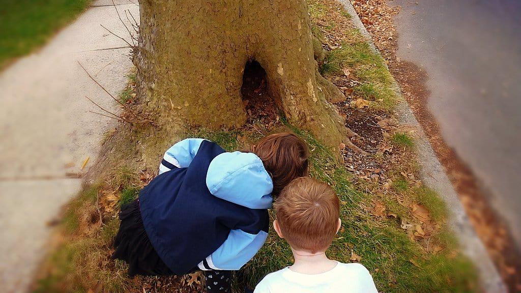Rituales de suerte con árboles — Gnomo Hortencio