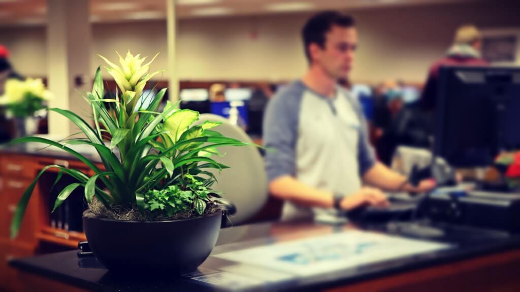 planta en tu escritorio