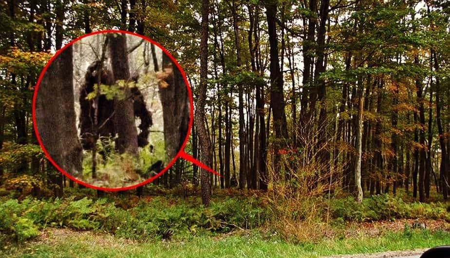 El Bigfoot (Pie Grande) ya no es un mito, ¿existe?