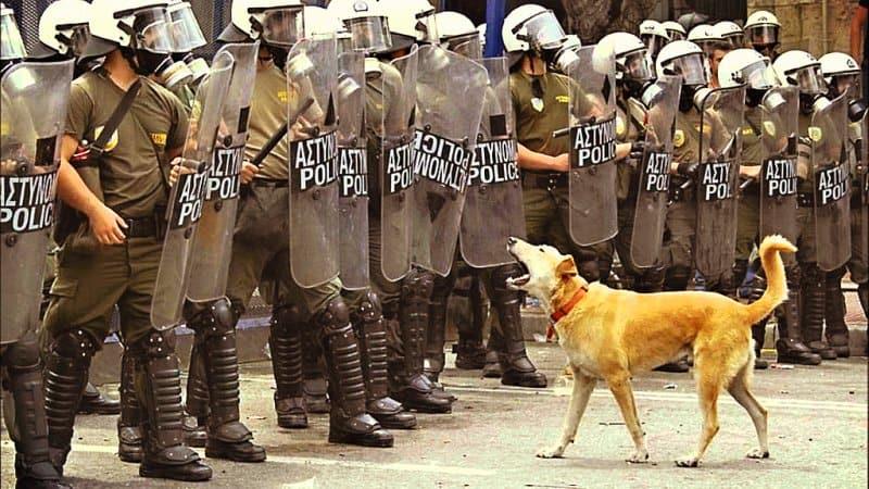 Proteje tu mascota en tiempos violentos