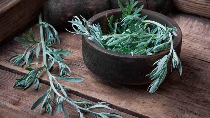 Artemisa Planta Medicinal