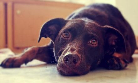 ¿Tu perro padece depresión?