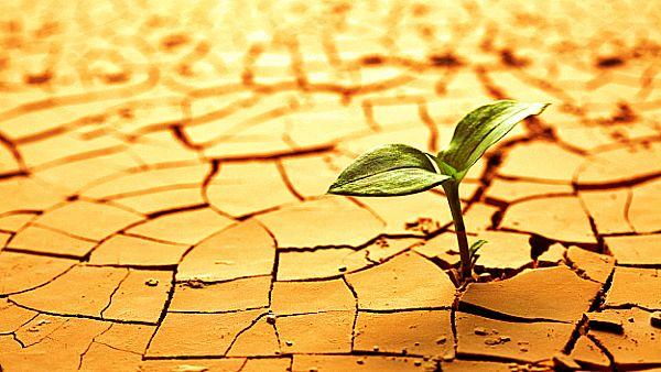 ¿Quieres aprender a ser más resiliente?