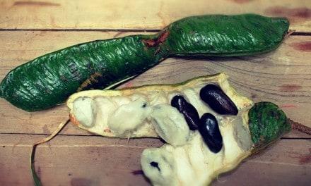 Inga o Guama — Beneficios para la salud