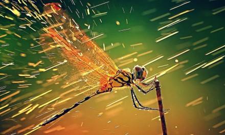 Supersticiones — Dragonfly — Libélula