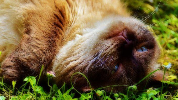 Astrología para gatos
