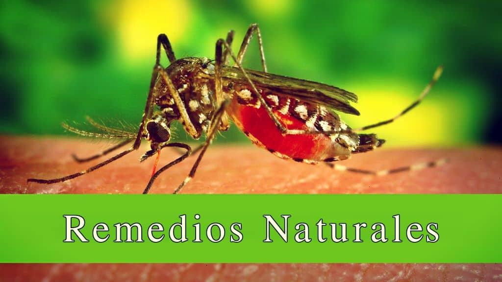 Picaduras de mosquitos ¿cómo aliviarlos?