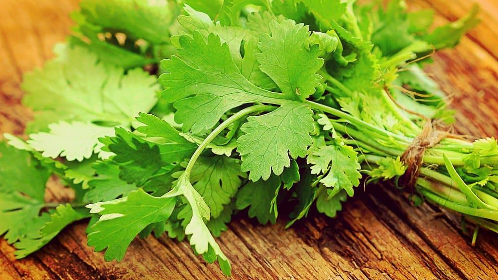 Beneficios y maneras de usar el cilantro para la salud