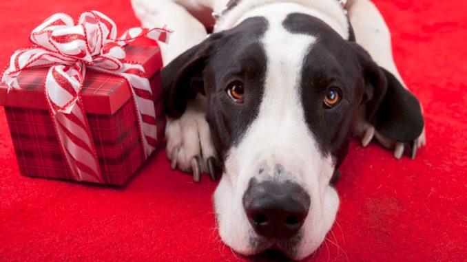 Navidad para Perros