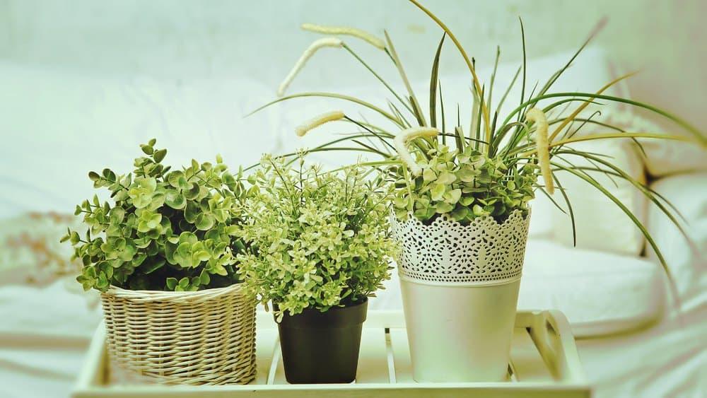 Purifica el aire de tu casa con estas plantas