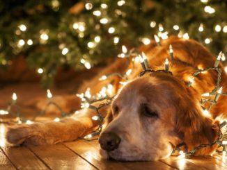 Peligros de la navidad para las mascotas