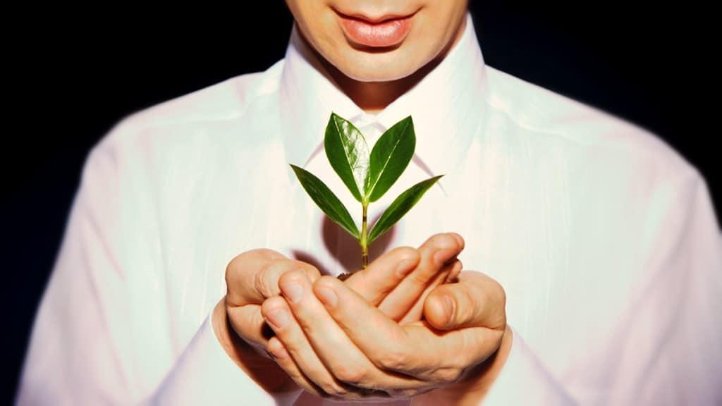 ¿Surte efecto hablar a las plantas?