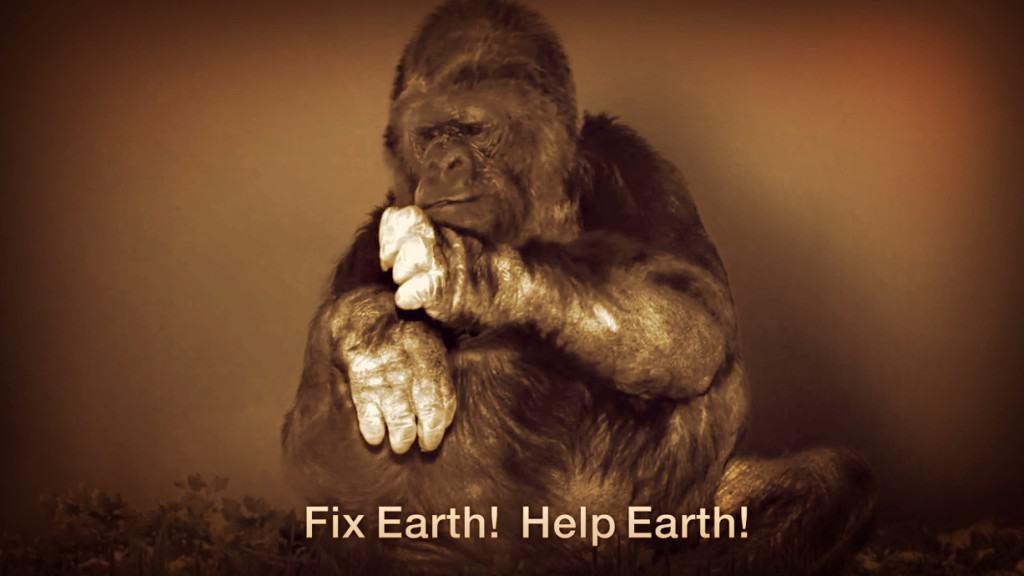 Una gorila tiene un emocionante mensaje para los humanos