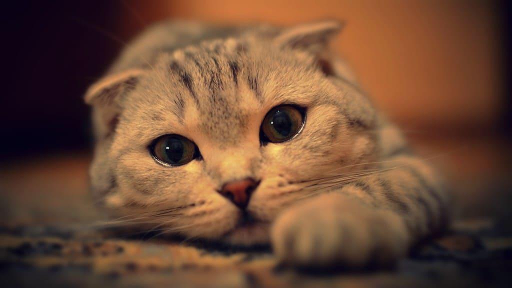 Así es como te ven y piensan los gatos