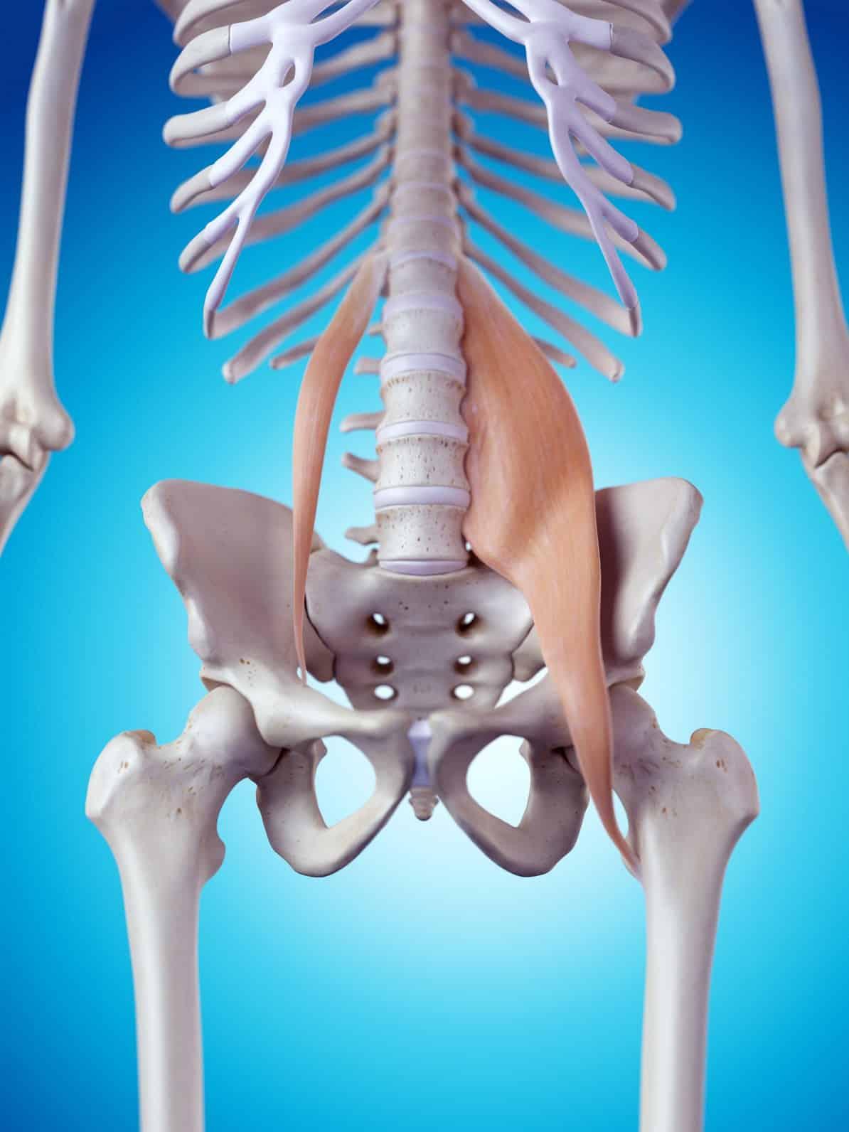 El Músculo Psoas