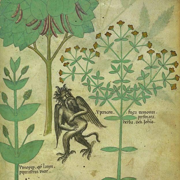 Con vello facial, pezuñas, cuernos y cola... y además asustado en un jardín pues la hierba hibericum supuestamente repele a los demonios.