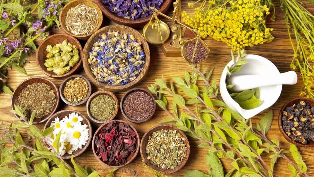 Plantas y hierbas para bajar la fiebre