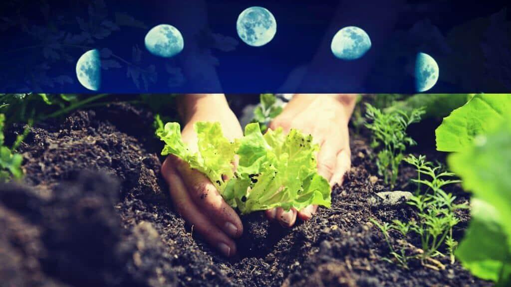 Influencia de la Luna en los cultivos de hortalizas