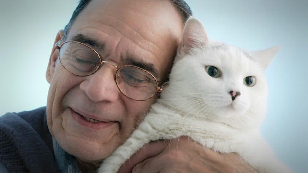 gatos y su escudo de protección