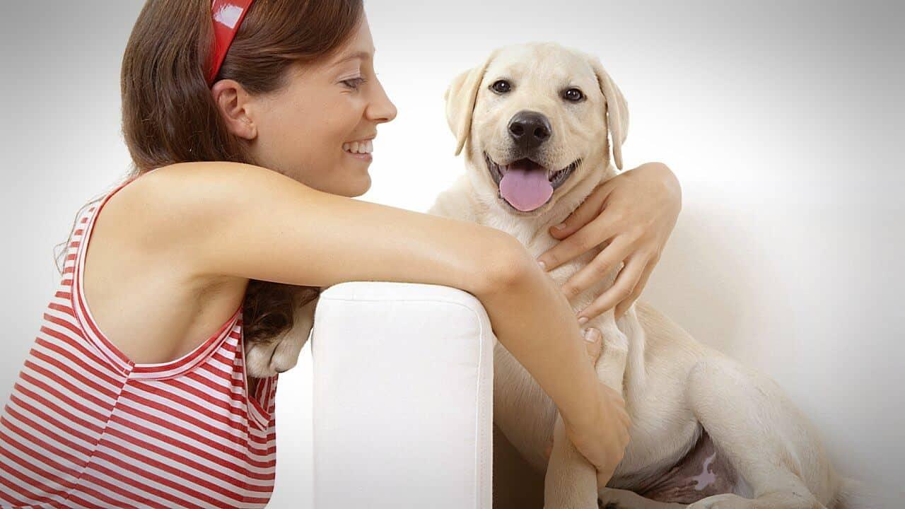 Perros pueden olfatear si una persona es buena