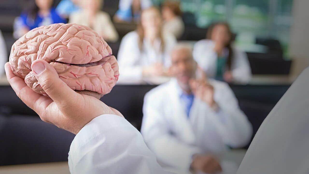 El cerebro del hombre pesa más, pero...