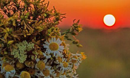 Solsticio de Verano 21 de Junio  – Origen – Historia – Leyendas
