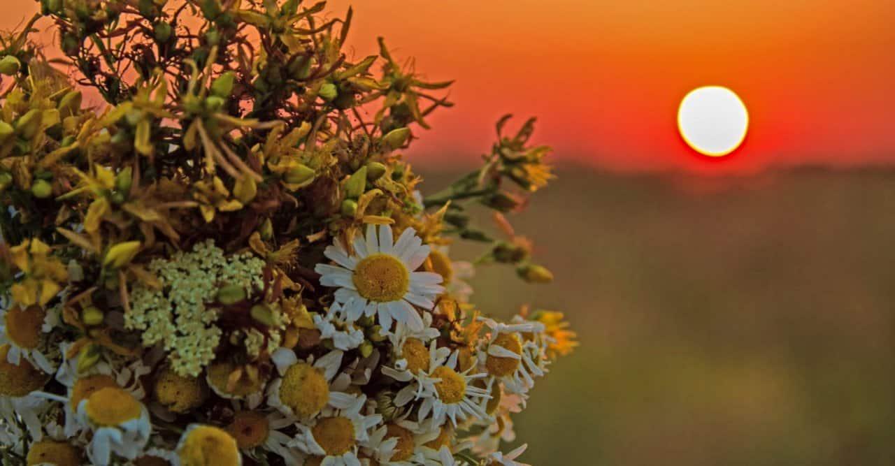 Solsticio de Verano