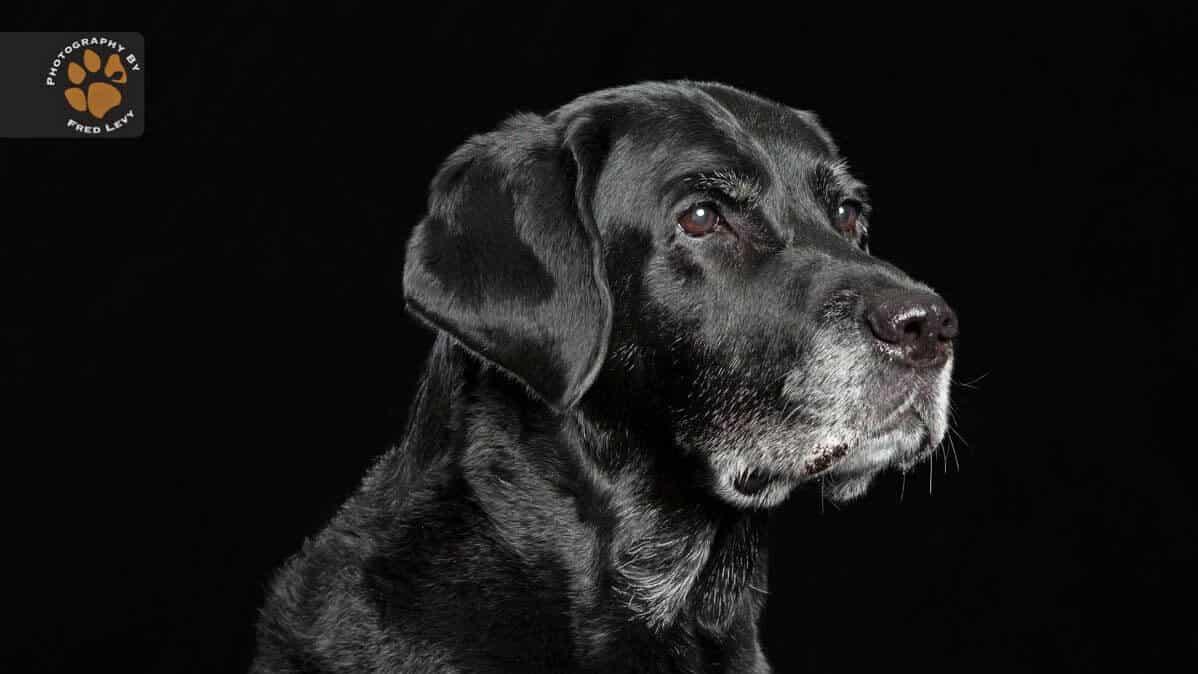 Síndrome del Perro Negro