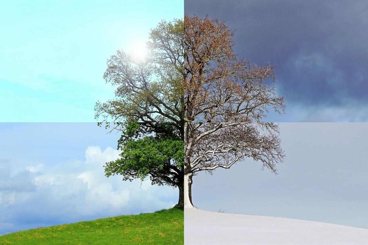 Las Estaciones de la Vida – Reflexiones de Sabiduría y Conocimiento