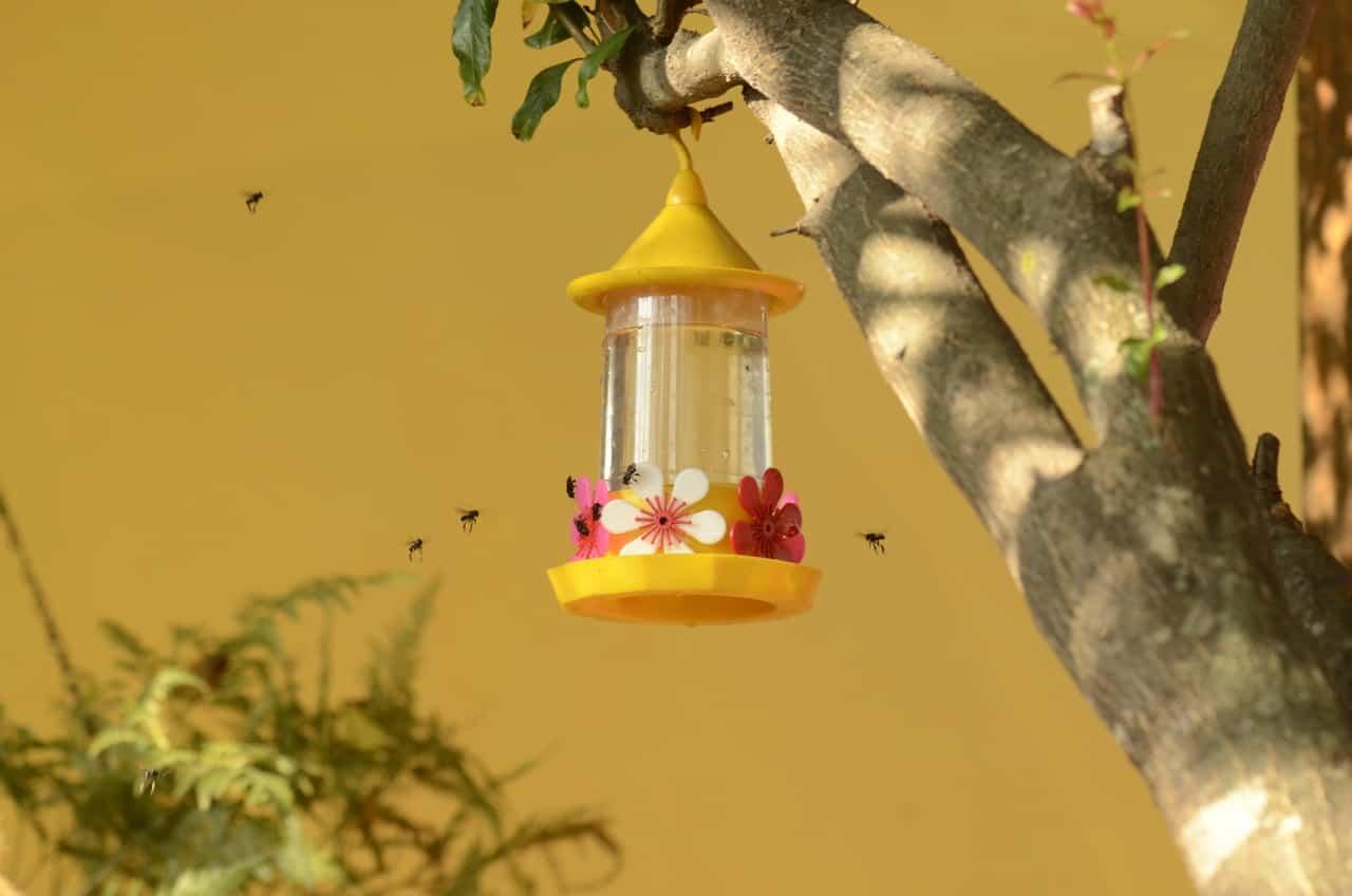 Plantas que debemos sembrar para ayudar a las abejas y evitar su extinción