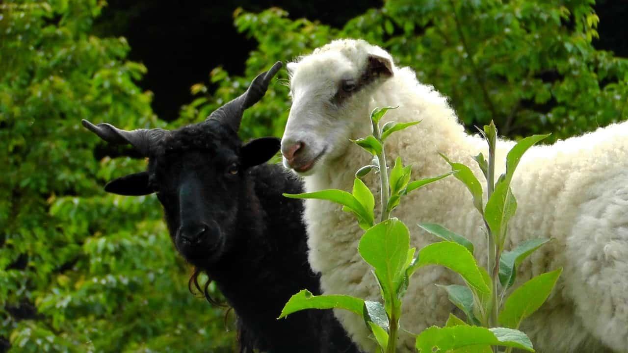 ¿Eres la oveja negra de la famila?