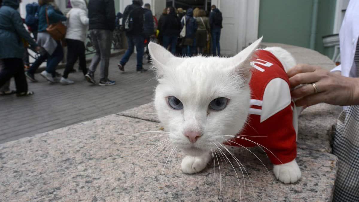 Gato Achille – Pronosticador oficial Mundial Rusia 2018
