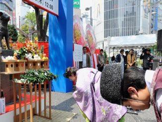 Funerales para mascotas en Japón