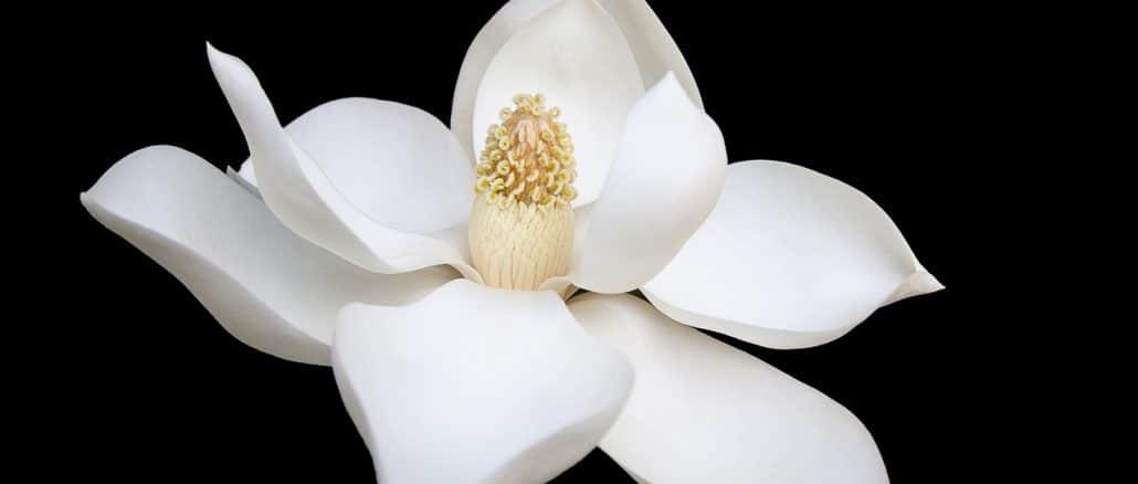 Gardenia tan poderosa como el valium