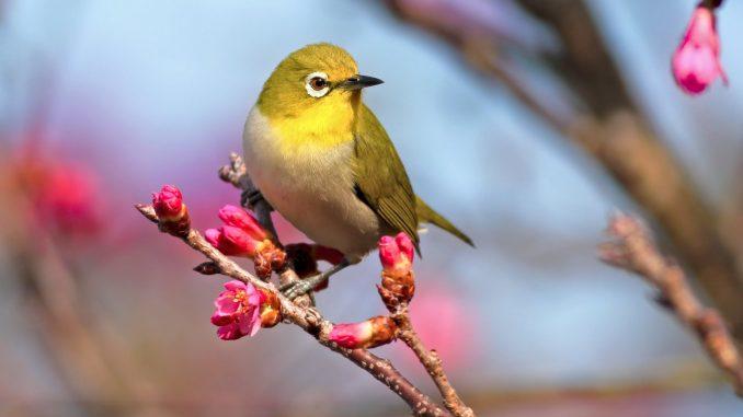 Significado de las Aves según el Feng Shui