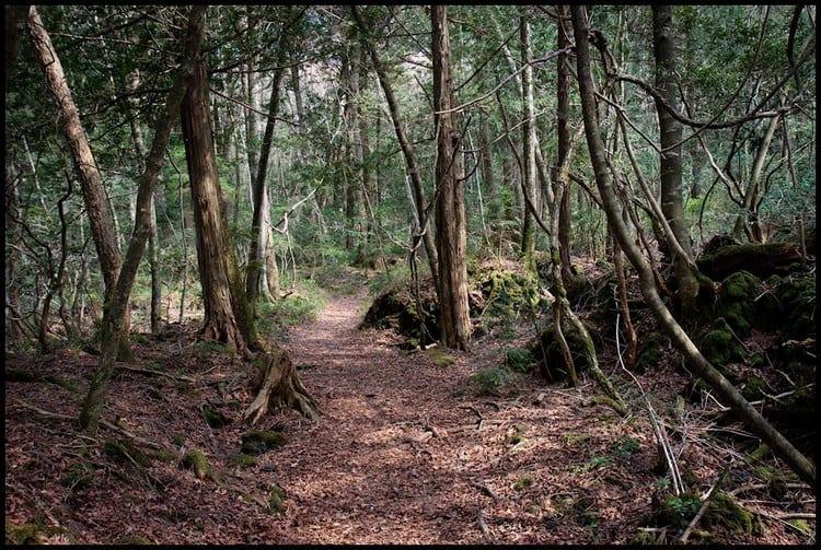 Aokigahara Bosque de los Suicidas Yamanashi