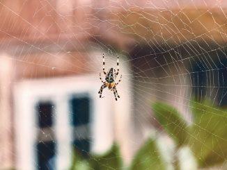 Por qué no debes matar las arañas que encuentres en tu casa