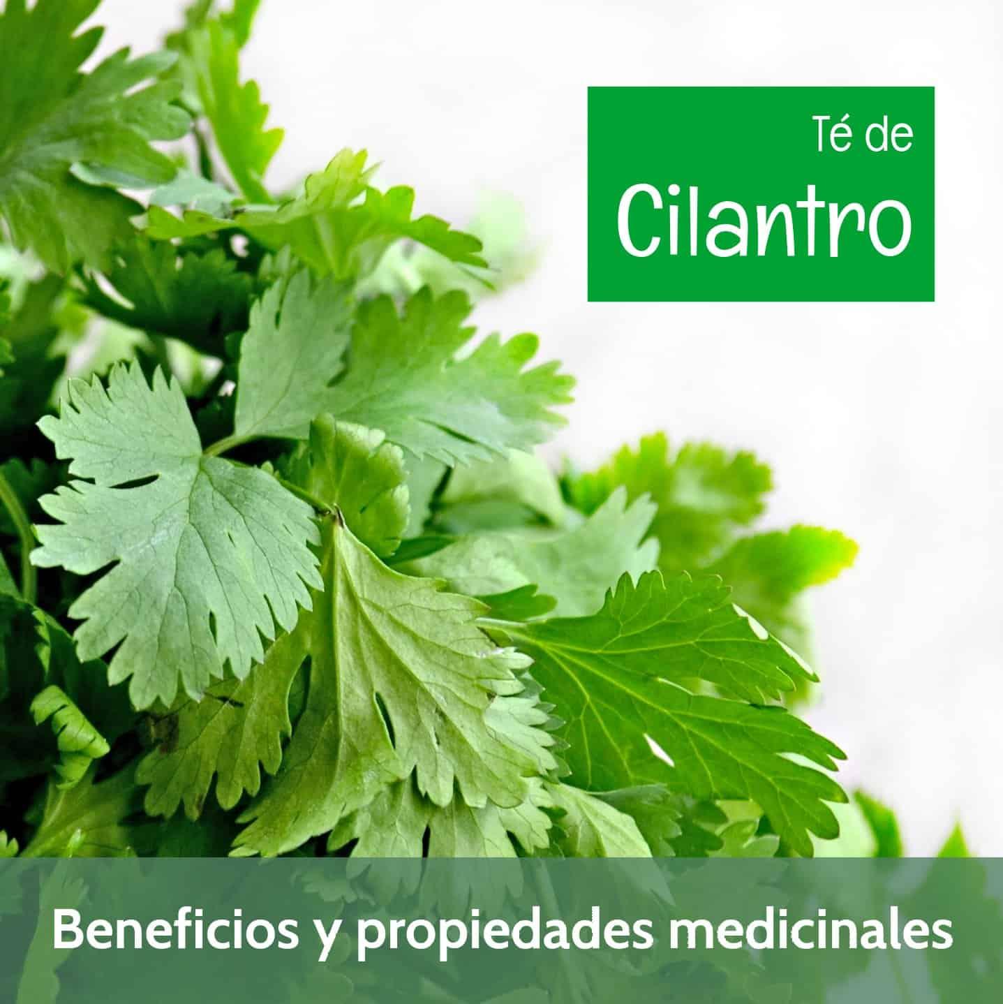 Beneficios medicinales del té de cilantro