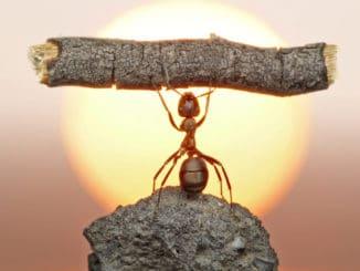 La hormiga desmotivada