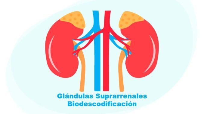 Glándulas Suprarrenales Biodescodificación