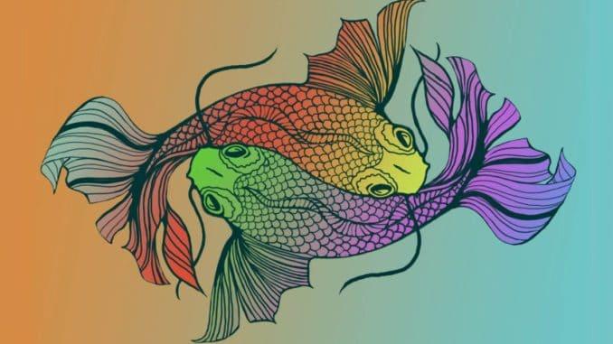 Dos peces que nadan en direcciones